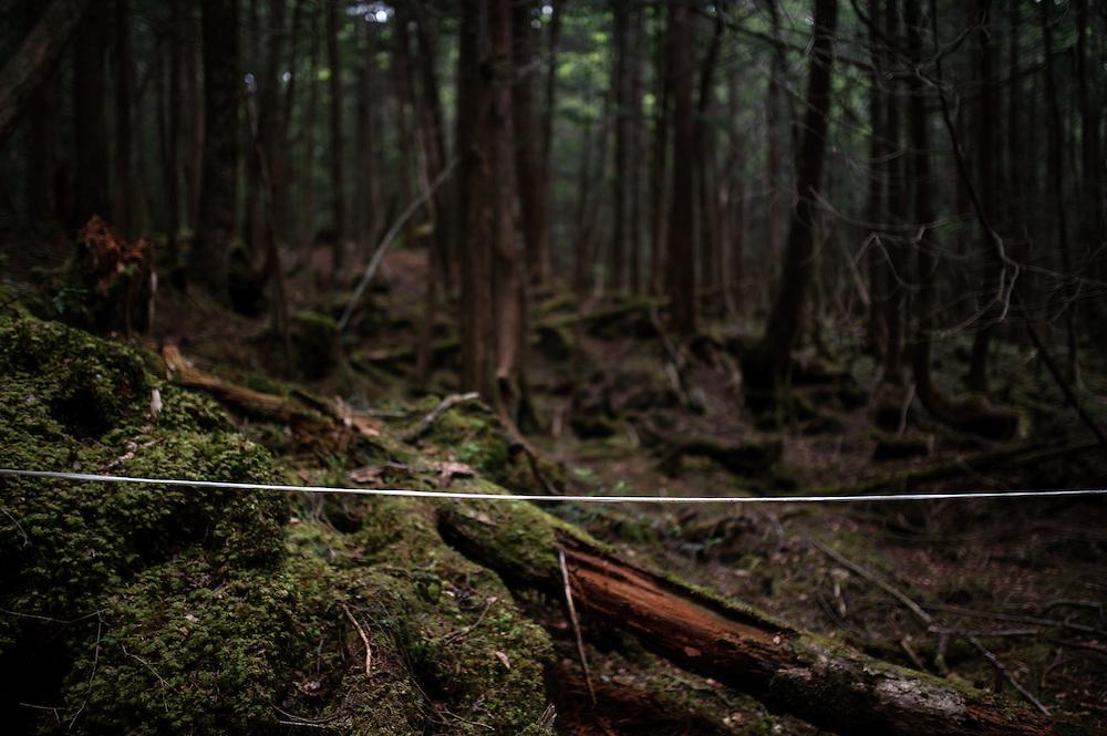 Des rubans sont tirés un peu partour dans la forêt, ultime lien avec les vivants, fil d'ariane pour éviter de se perdre, le sens est assez complex. Au pied du Mont Fuji, la mer d'arbres