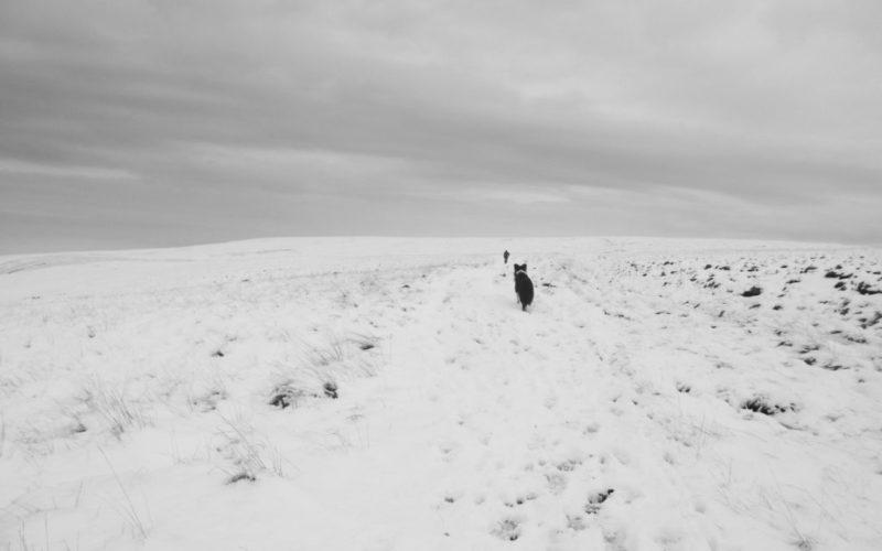 dartmoor-hellhound