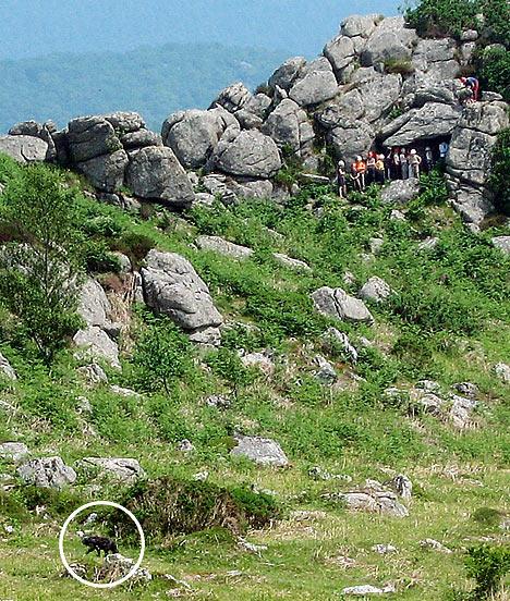 dartmoor-hellhound2