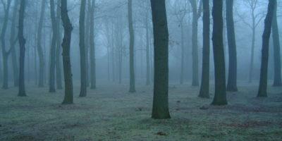 goatmans-forest