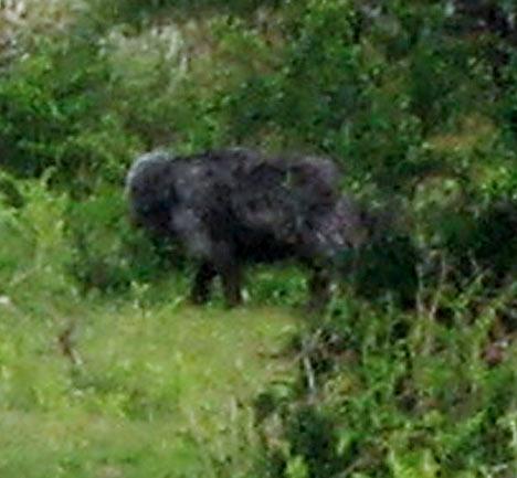 hellhound-of-dartmoor3