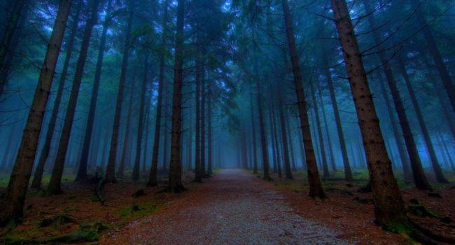 uks-most-haunted-screaming-woods-1