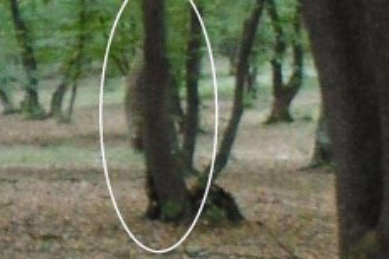 Hoia Baciu Forest 3
