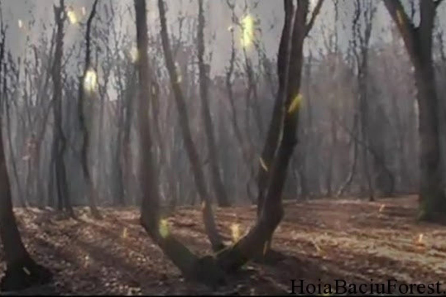 Hoia Baciu Forest Circle 13