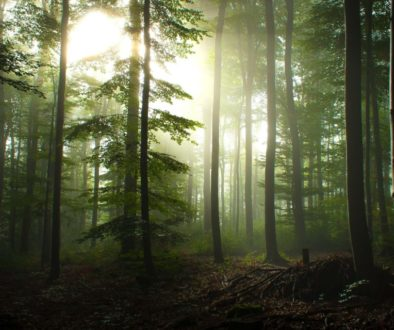 Hoia Baciu Forest Circle 3